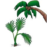 Palms. 6 - two colored cartoon illustration as vector Stock Photos