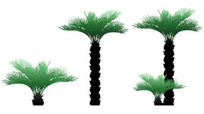 Palms. Illustration of palms, colors, green Stock Image