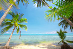 Among the palms. View of nice tropical empty sandy beach with some palm royalty free stock photography