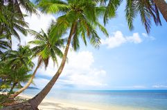 Palms. View of nice tropical empty sandy beach with some palm royalty free stock photo