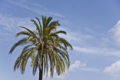 Palms. Mediterranean palms, near the coast Stock Images