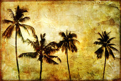 Palms. On sunset - artistic picture in retro style Stock Photos