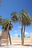 Palms. In Tinzit city in Morocco Stock Image