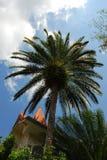 The Palms. Sunny Florida Palm Tree's Stock Photography