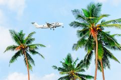 Palms against a blue sky, plane flies over palm trees. Tropical photo background stock photography