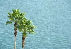 Palms Against Water Stock Photos