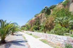 Palms of Agia Galini Royalty Free Stock Photos