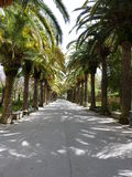 Palms alley Stock Photography