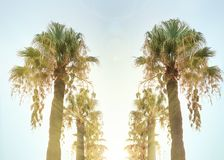Palms alley, road to the beach, sunset rays. Alley of tall palm trees, toned sky and yellow sun rays coming through the leaves. summer in Albania Royalty Free Stock Photos