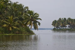 Palms along canals and lakes in Backwaters Royalty Free Stock Photos