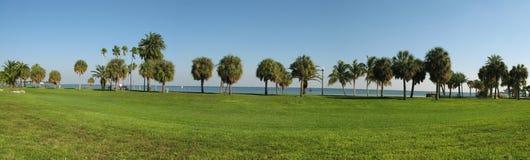 Palms along Florida coastline. Green grass and palms along Florida coastline stock photography