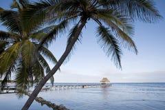 Palms along the Shore Stock Image