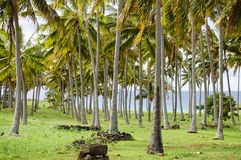 Palms in Anakena Beach. Easter Island royalty free stock images