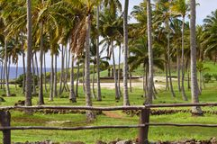 Palms in Anakena Beach. Easter Island stock images