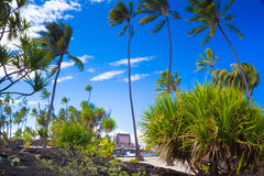Palms and ancient Hawaiian dwellings Stock Images