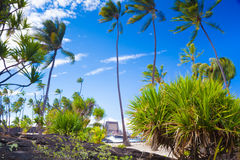 Palms and ancient Hawaiian dwellings Stock Photos