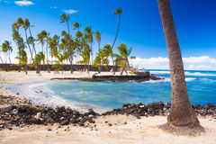 Palms and ancient Hawaiian dwellings Royalty Free Stock Photo