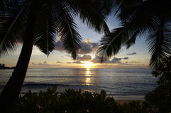 Palms at Anse Takamaka, sundown, Seychelles Stock Image