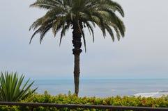 Palms around Royalty Free Stock Photo