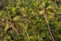 Palms background Royalty Free Stock Photo