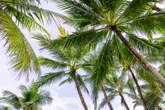 Palms in Bali Royalty Free Stock Photos