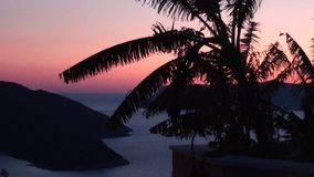 Palms and bay at twilight zoom out stock footage