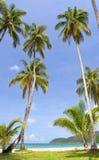 Palms on the beach Stock Photo