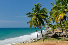 Palms Beach. Exotic palms cliff beach in Varkala. Kerala. India Royalty Free Stock Photo