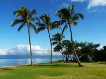 Palms on the beach Royalty Free Stock Photos