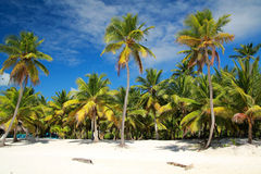 Palms on beach Royalty Free Stock Photo