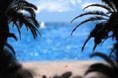Palms on the beach Stock Photos