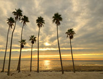 Palms on a Beach Royalty Free Stock Photography