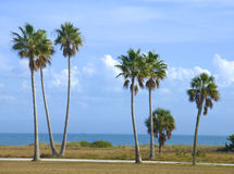 Palms by the Beach Royalty Free Stock Images