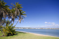 Palms on the beach. Of Mission Bay, San Diego, California Stock Image