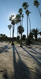 Palms on the beach. A picture of tall palm trees on a beach, lit from the back by the sun royalty free stock images