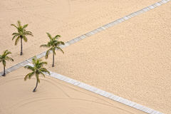 Palms on the Beach Royalty Free Stock Photography