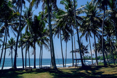 Palms on the beach in Bali Royalty Free Stock Photography