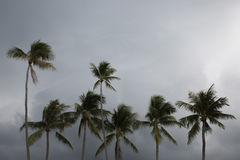 Palms on the beach with cloudy sky. Palms on the beach with grey cloudy sky Stock Image