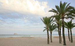 Palms and Beach Costa Blanca in Benidorm Spain Royalty Free Stock Photography