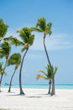 Palms on the beach. Palms at Juanillo beach in Dominican republic Stock Photography