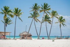 Palms on the beach. Palms at Juanillo beach in Dominican republic Stock Photo