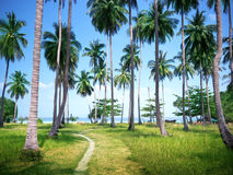 Palms on beach of Phi Phi island Stock Photo