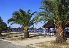 Palms on the beach of Porto Carras Grand Resort. Stock Photo