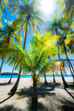 Palms at the beach. Stock Photography