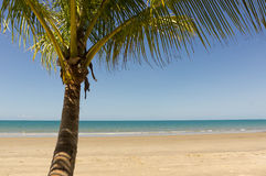 Palms on the beach in Queensland Stock Photo