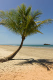 Palms on the beach in Queensland Royalty Free Stock Images