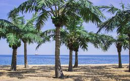 Palms on the beach Royalty Free Stock Photo
