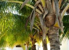 Palms beach summer holiday garden sun mexico Stock Images
