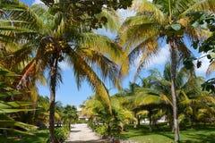 Palms beach summer holiday garden sun mexico Royalty Free Stock Photo