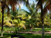 Palms beach summer holiday garden sun mexico Royalty Free Stock Images